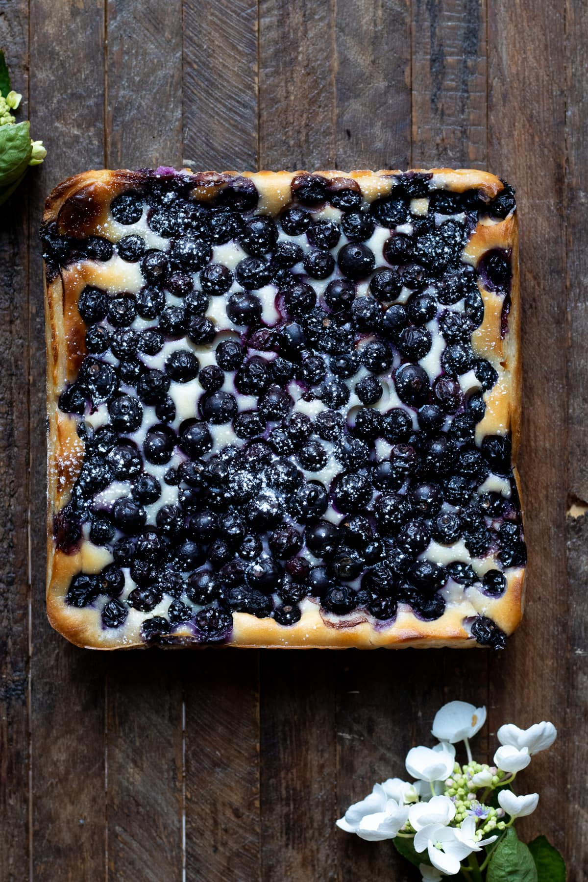 baked blueberry cheesecake bars before slicing dusted with powdered sugar.